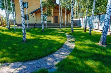 посевной-газон-