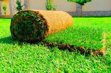 рулонный-газон